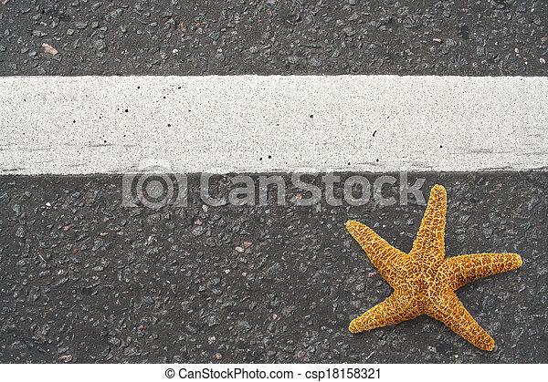 Starfish on the highway - csp18158321