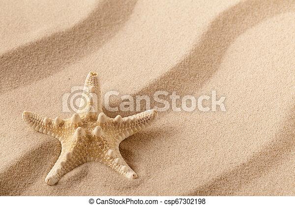 Starfish or sea star on the seashore - csp67302198