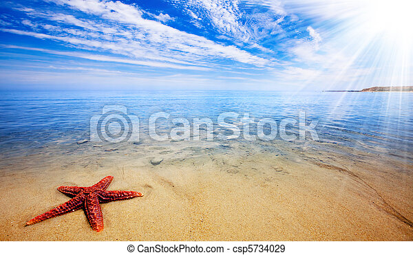 starfish, paraisos  - csp5734029