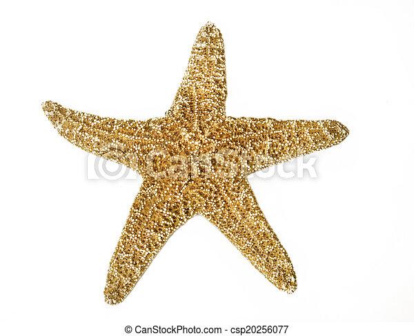 Starfish - csp20256077