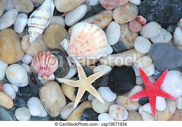 Starfish, seashell and pebble stone - csp19571934