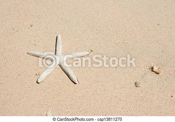 Starfish standing on the beach - csp13811270