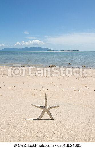 Starfish standing on the beach - csp13821895