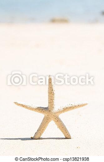 Starfish standing on the beach - csp13821938