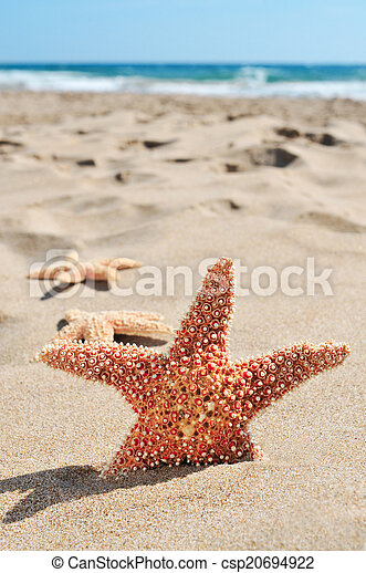 starfishes on the sand of a beach - csp20694922