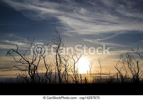 Stark bush silhouette against stunning sunset sky - csp14297670
