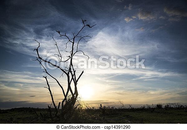 Stark bush silhouette against stunning sunset sky - csp14391290