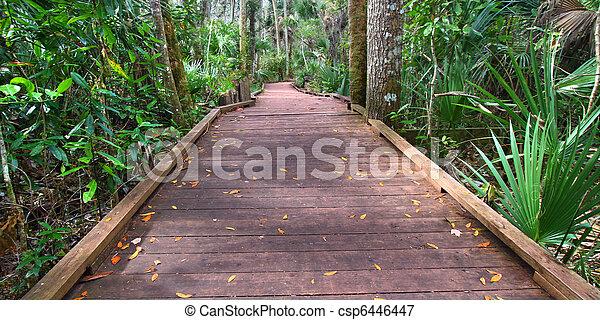State Park Boardwalk in Florida - csp6446447