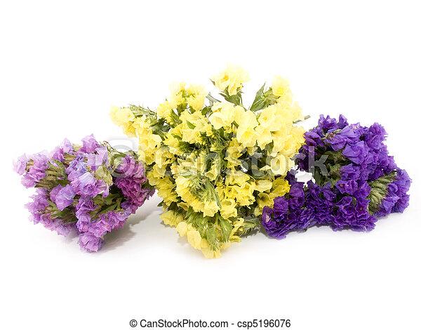 Statice flowers limonium sinuatum bouquet of beautiful statice statice flowers limonium sinuatum csp5196076 mightylinksfo