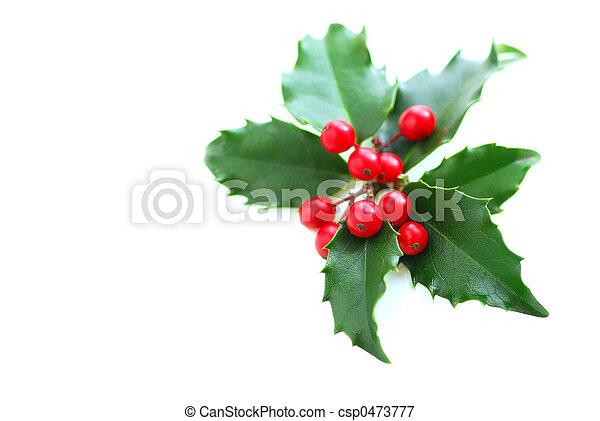 stechpalme, weihnachten - csp0473777