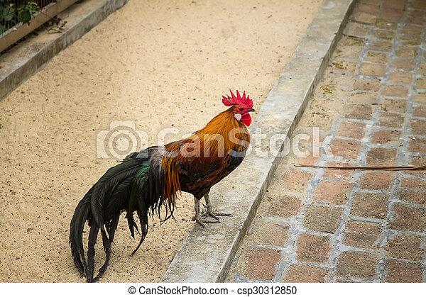 Milf get big cock