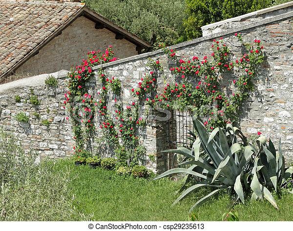 Stein Altes Zaun Wand Rose Rotes Italien Bluhen Tor