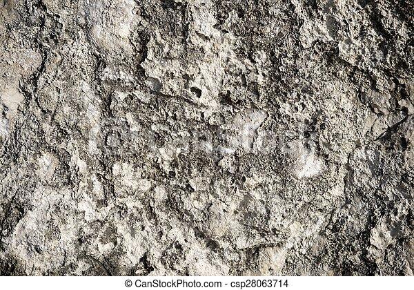 stein - csp28063714