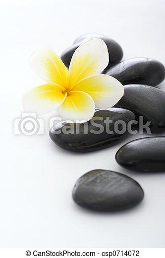 stenen, frangipani, witte achtergrond, spa - csp0714072