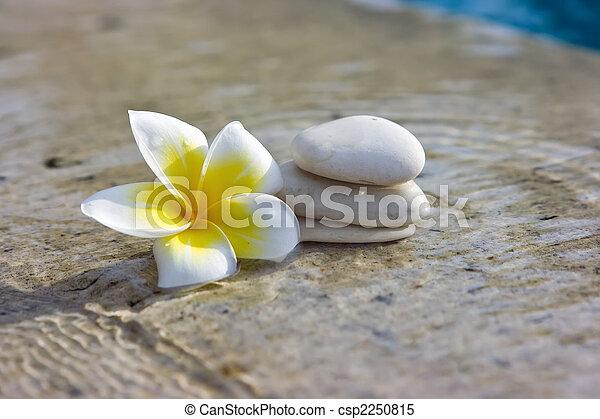 stenen, spa, hotel, bloem - csp2250815