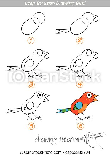 Step by step drawing Bird - csp53332704