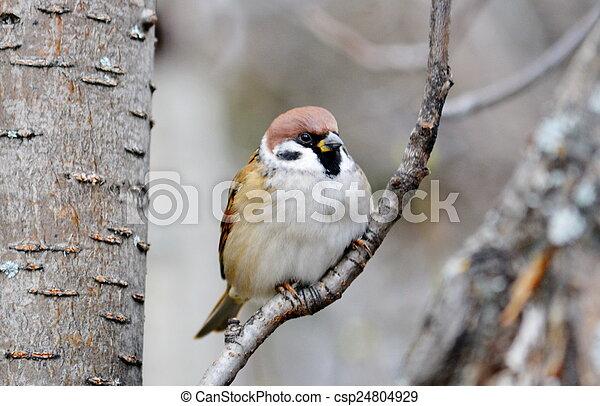 steppes, oiseaux - csp24804929