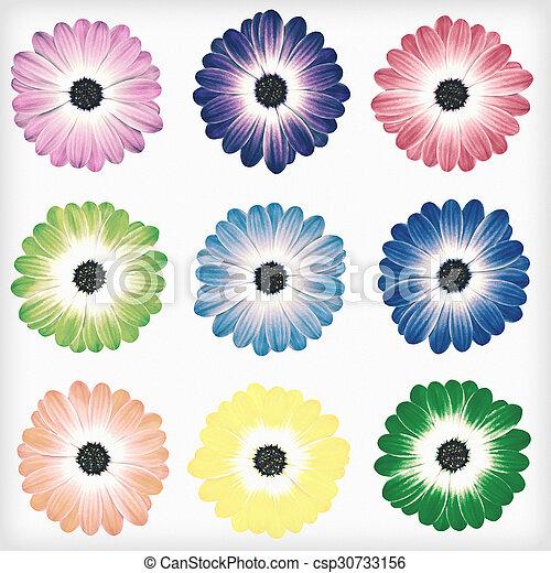 stil, årgång, isolerat, retro, tusensköna, blomningen - csp30733156