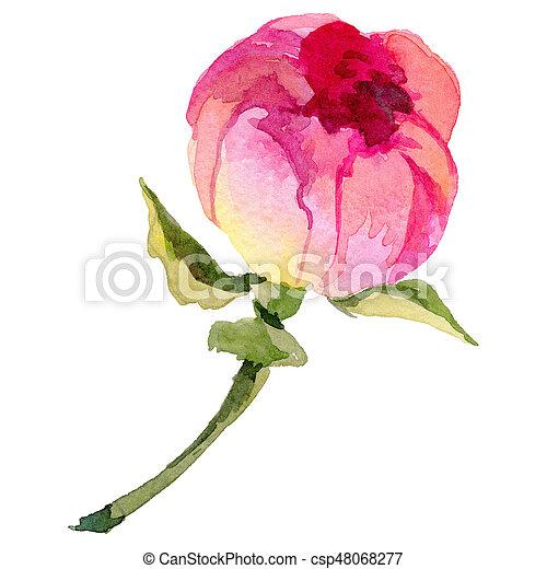 pfingstrose zeichnen blumen zeichnung, stil, blume, pfingstrose, isolated., aquarell, wildflower. stil, Design ideen