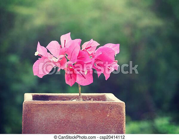 stil, gammal, årgång, bougainvillea, retro blommar - csp20414112