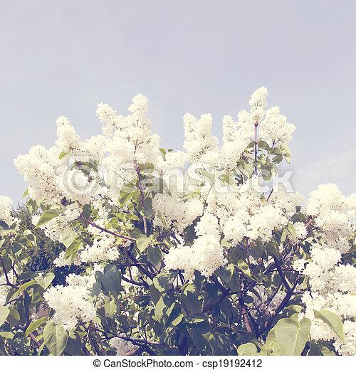 stil, lila, fjäder, flowers., retro, filial, årgång - csp19192412