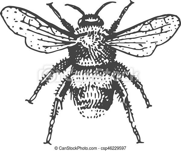 Stil Weinlese Freigestellt Hand Insekt Tier Graviert Käfer