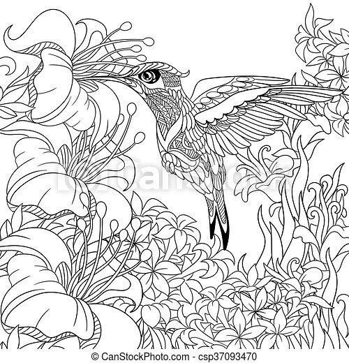 Stilisiert, vogel, kolibri. Hibiskus, nectar., skizze, färbung ...