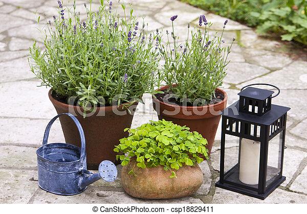 Still life in a garden - csp18829411