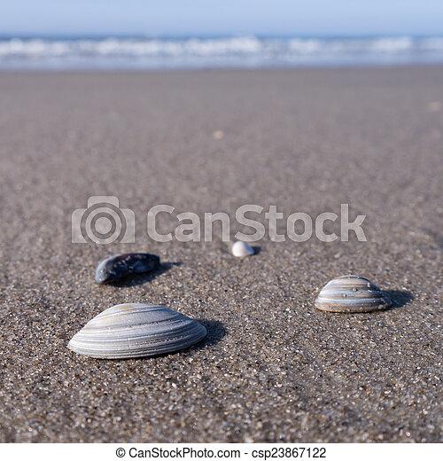 still life of mussels - csp23867122