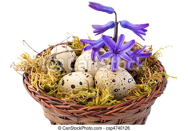 Still Life With Quail Eggs And Hyacinth - csp4740126