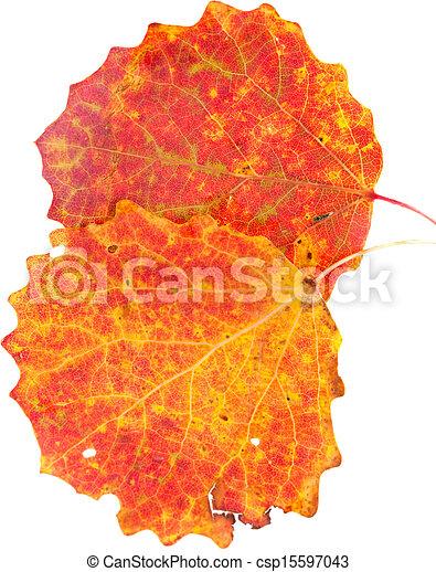 Autumnales Stillleben - csp15597043