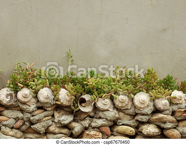 Stone and Shell Wall with Succulents - csp67670450