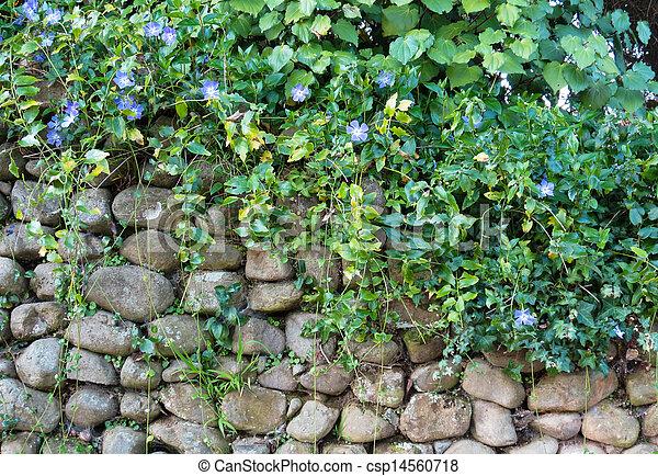 Stone Wall Plants - csp14560718