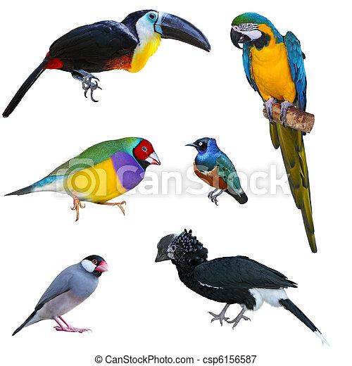 stor fugl, samling - csp6156587