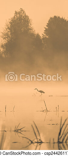 Stork in the water at sunset - csp24426117