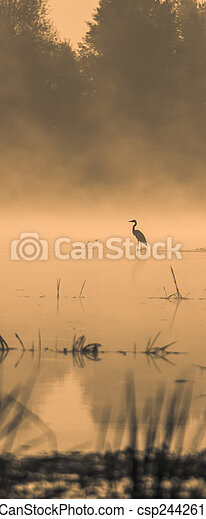 Stork in the water at sunset - csp24426124