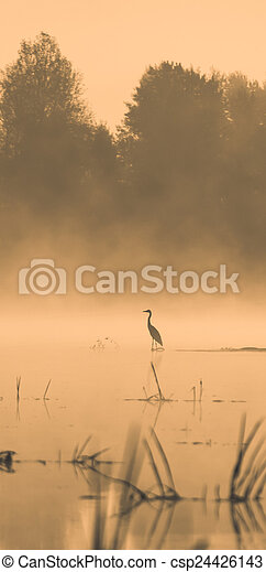 Stork in the water at sunset - csp24426143