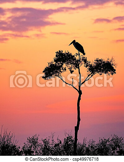 Stork on Acacia Tree in Africa at Sunrise - csp49976718