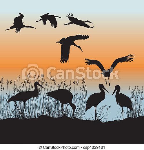 Storks vector - csp4039101