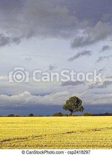 stormy skies 3 - csp2418297