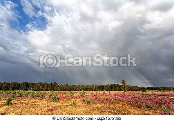 stormy sky and rainbow over meadow with heather - csp21572363