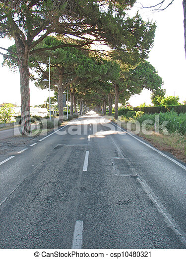 straight asphalt road with pine trees on the sides - csp10480321