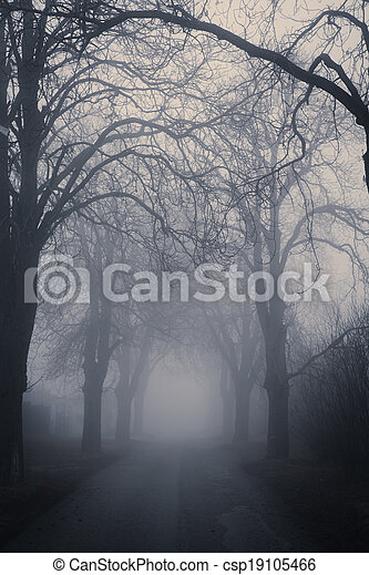 Straight foggy passage surrounded by dark trees - csp19105466