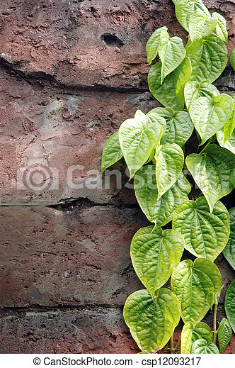 strands of green leaves on the wall - csp12093217