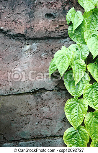 strands of green leaves on the wall - csp12092727