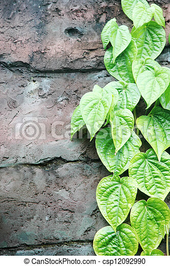 strands of green leaves on the wall - csp12092990