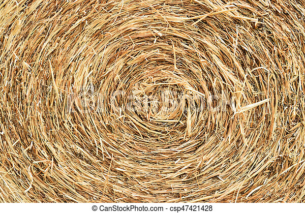 straw bale rolled up - csp47421428