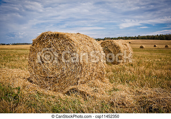 Straw Haystacks on the grain field after harvesting - csp11452350