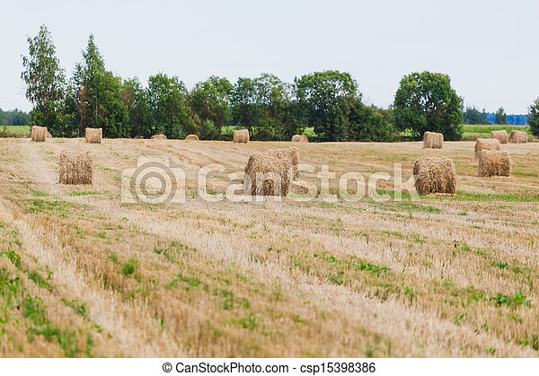 Straw Haystacks on the grain field - csp15398386