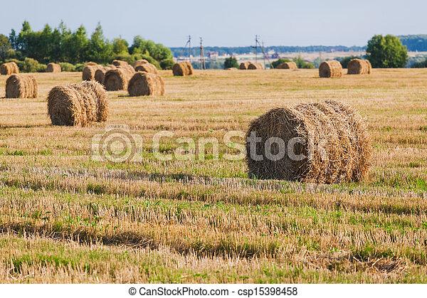 Straw Haystacks on the grain field - csp15398458